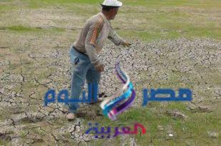 البوار يهدد 5 آلاف فدان أرز في قرى مركز قطور بالغربية |
