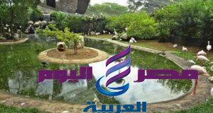 فى ظلال الهدى النبوى ومع أروى بنت عبد المطلب