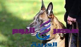 التصدى لظاهرة تواجد الكلاب الشرسة بصحبة أصحابها بشوارعنا   الكلاب الشرسة