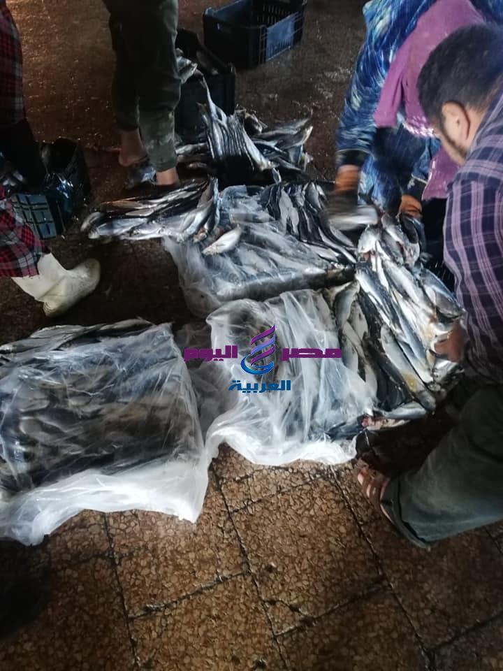 أبو هاشم يضبط مصنع لتصنيع الاسماك المدخنه الغير صالحة للاستهلاك الادمى بكفر الزيات غربية