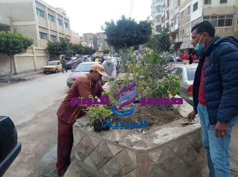 تزويد المساحات الخضراء بالزهور والأشجار دائمة الخضرة بمدينة دسوق