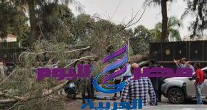 مصرع شخص وتحطم «موتوسيكل» في سقوط شجرة استراحة محافظ الدقهلية