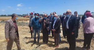 بالصور موسم حصاد القمح بأحد الحقول الزراعية بمنطقة سهل الطينة شرق بورسعيد | حصاد