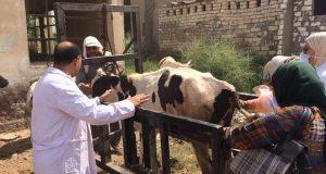 الطب البيطري بالبحيرة... ترقيم وتسجيل ١٠١٥٧ رأس ماشية واستخراج ٢١٦١٠ بطاقه تسجيل حيوان وبدل فاقد خلال شهررمضان