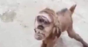 ماعز برأس قرد يثير الرعب في مصر. | قرد