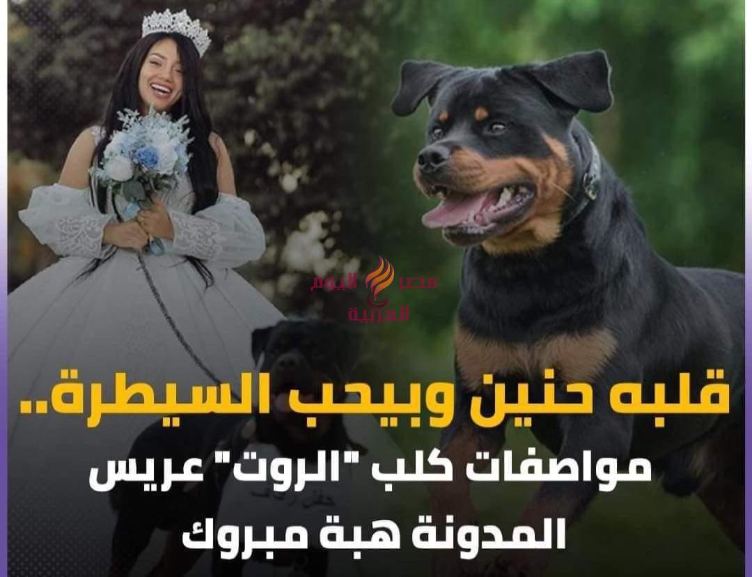 محامي بالنقض يقدم بلاغ للنائب العام ضد هبة مبروك
