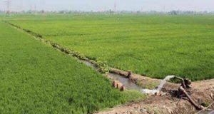 الزراعة تحدد 3 مواقع في الوادي الجديد لتنفيذ حقول إرشادية للذرة   مواقع