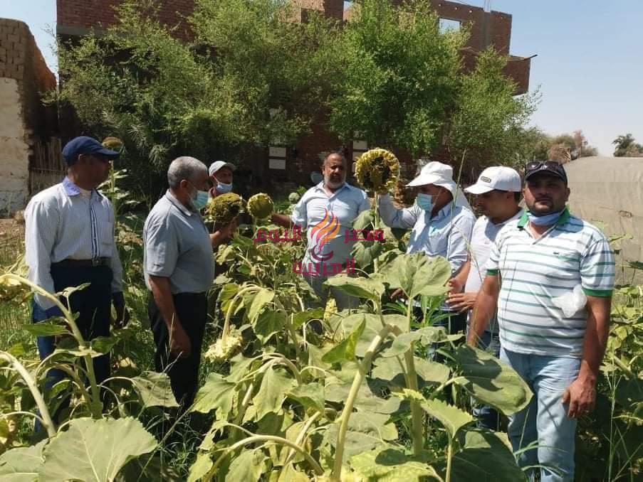 بالصور.. مديرية الزراعةبالوادي الجديد تبدأ تنفيذ مشروع العيادة الزراعية في 65 حقلاًبالأراضي الصحراوية |