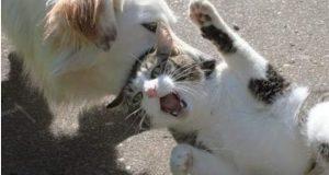 صاحبه القطه تقدم شكوي بسبب هجوم الكلب مما يؤدي الي وفاه القطه بالتجمع الخامس |