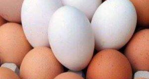 ارتفاع غير مسبوق في سعر كرتونة البيض | ارتفاع غير مسبوق في سعر كرتونة البيض